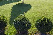 Morning Shadows In Decorative Garden