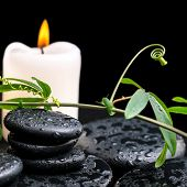 stock photo of tendril  - spa concept of green twig with tendril passionflower with drops and candles on zen basalt stones background closeup - JPG
