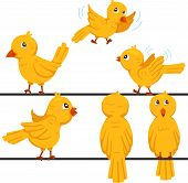 Illustration of birds funny cartoon