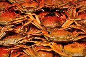 Shanghai Hairy Crabs