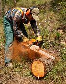 Lumberjack In Action