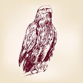 Eagle - vector illustration