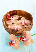 Orchid in coconut bowl