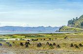 Countryside in Peru, region of Lake Titicaca