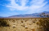 Desolation Of Mojave Desert