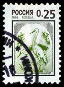 Vintage  Postage Stamp. Bird  Heron.