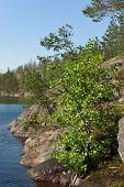 Rocky Forest Lake Coastline