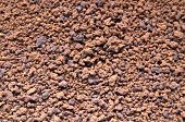Coffee Grains Closeup