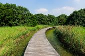 Walking path in wetland