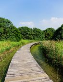 Boardwalk through wetland
