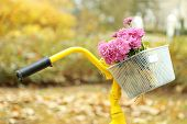 Beautiful yellow bicycle in autumn park with bouquet of chrysanthemums in basket