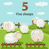 Illustrator of number five sheeps