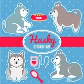 stock photo of laika  - Set of four cute husky breed puppies and dog care accessories  - JPG