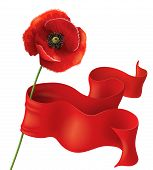 picture of poppy flower  - Poppy flower with red ribbon on white - JPG