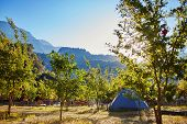 picture of pomegranate  - tent in the pomegranate orchard with riped pomegranates - JPG