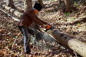 picture of man chainsaw  - Old man cutting trees using a chainsaw in the forest - JPG