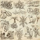 image of freehand drawing  - Flowers - JPG