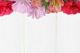 picture of carnations  - Top border of pink carnation daisy and lily flowers against a white wood background - JPG