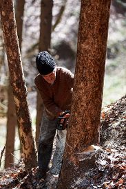 stock photo of man chainsaw  - Old man cutting trees using a chainsaw in the forest - JPG