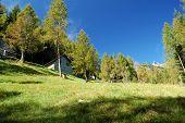 Summer Alpine Village Landscape