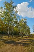 foto of nea  - road nea autumn forest with tree - JPG