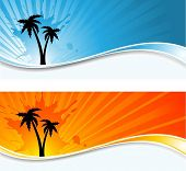 Palm tree backgrounds
