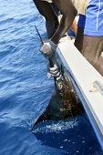 African man holding sailfish on sport fishing boat in atlantic saltwater