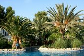 pic of gumbet  - Tropical Palms and pool - JPG