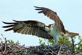 Bewachung des Nestes