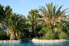 stock photo of gumbet  - Tropical Palms and pool - JPG