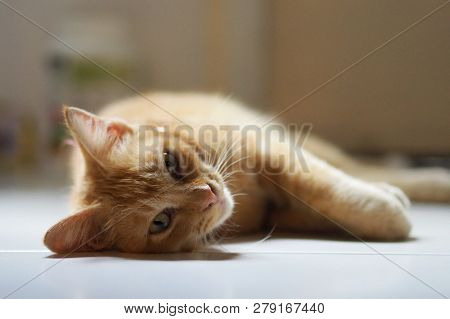 poster of Adorable Ginger Cat Lying On White Floor. Sleepy Lazy Cat. Cat At Home.-image