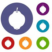 Quince Fruit Icons Set In Flat Circle Reb, Blue And Green Color For Web poster