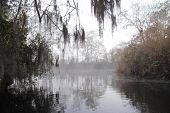image of suwannee river  - Early morning mist on the Suwannee River  - JPG