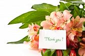 stock photo of thank you card  - bouquet of pink alstroemeria on white background - JPG