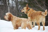 Alert Dogs In The Snow