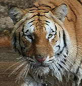 picture of memphis tennessee  - A mosaic custom picture of Narayan the 2 year old tiger housed at the Memphis Zoo - JPG