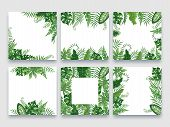 Exotic Leaves Frame. Tropical Leaf Border, Nature Summer Frames And Luxury Palm Leaves Borders Vecto poster