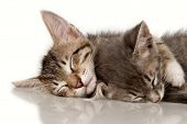 Kittens on a white background
