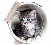 Kitten. Age - 1 month