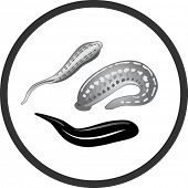 Vector. Illustration of medical leech.