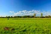 Green Big Meadow, Forest And White Clouds On Blue Sky - Blur And Contrasting Colors poster
