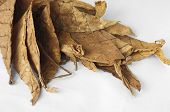 Dried Tobacco Leaves
