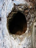 Hollow In Tree
