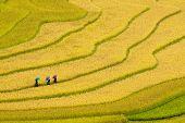 Tres mujeres visitan sus campos de arroz en Mu Cang Chai, Yen Bai, Vietnam
