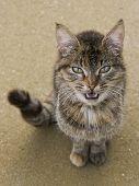 Cat want to talk