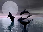 Dolphins Playing In The Moonlight