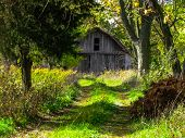 An Old Barn In the Woods
