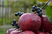 Fresh apple on fresh air