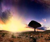 Exotic Tree Sunset
