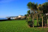 Seaton Palm Trees